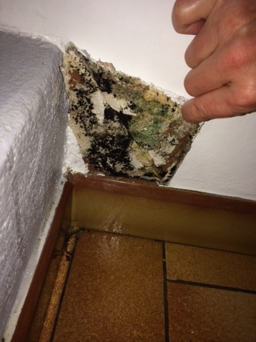 Black mould that I found in my home.