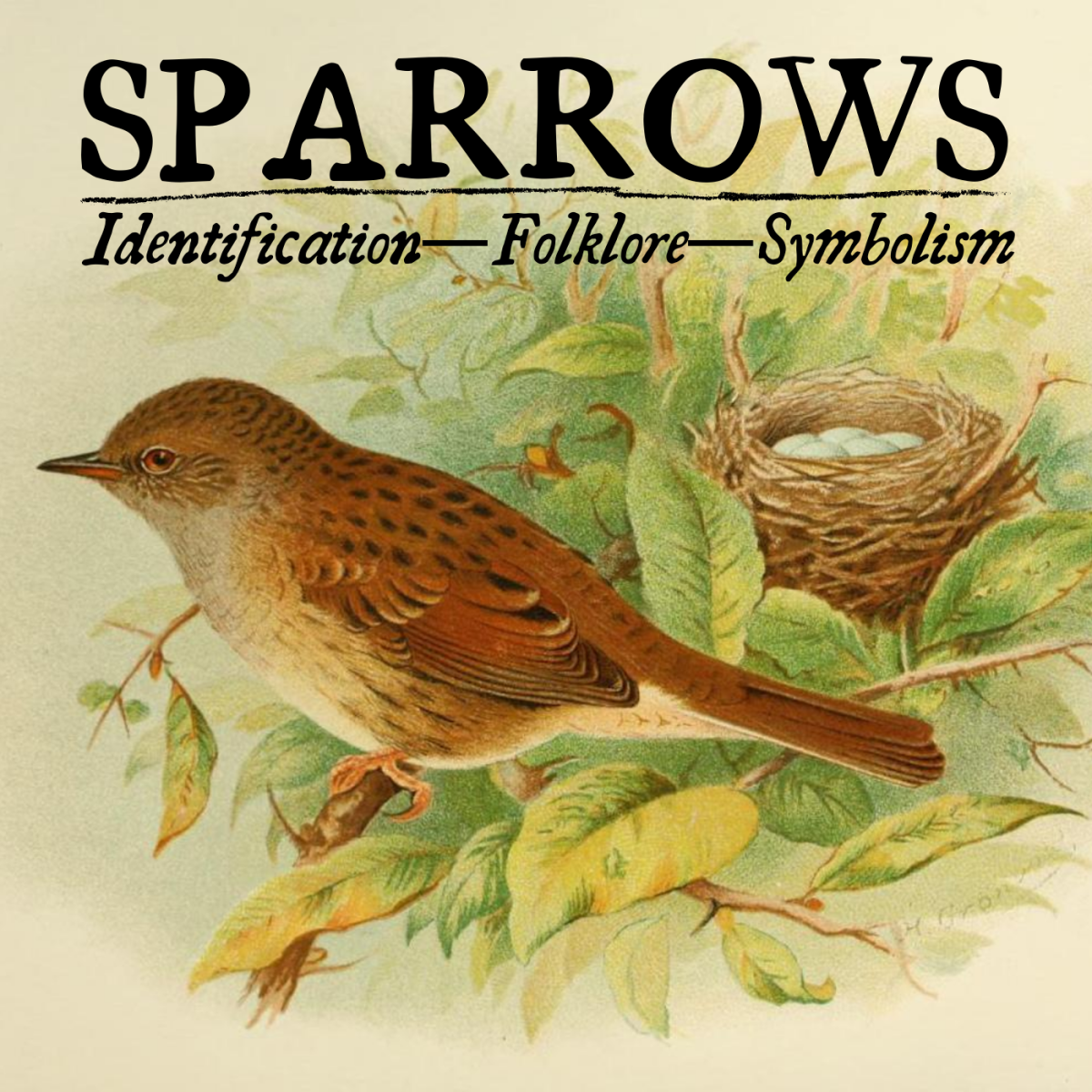 The Meaning of Sparrows: Symbolism and Identification
