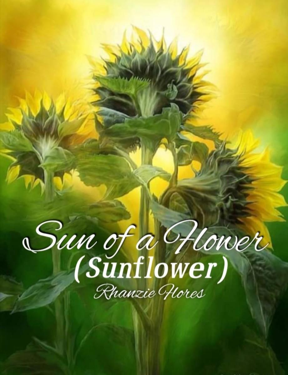 Sun of a Flower (Sunflower)