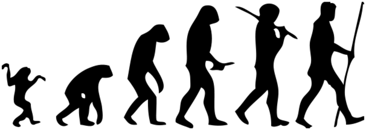 Evolution has allowed human beings to stand upright, walk on two feet, and grip tools and weapons.