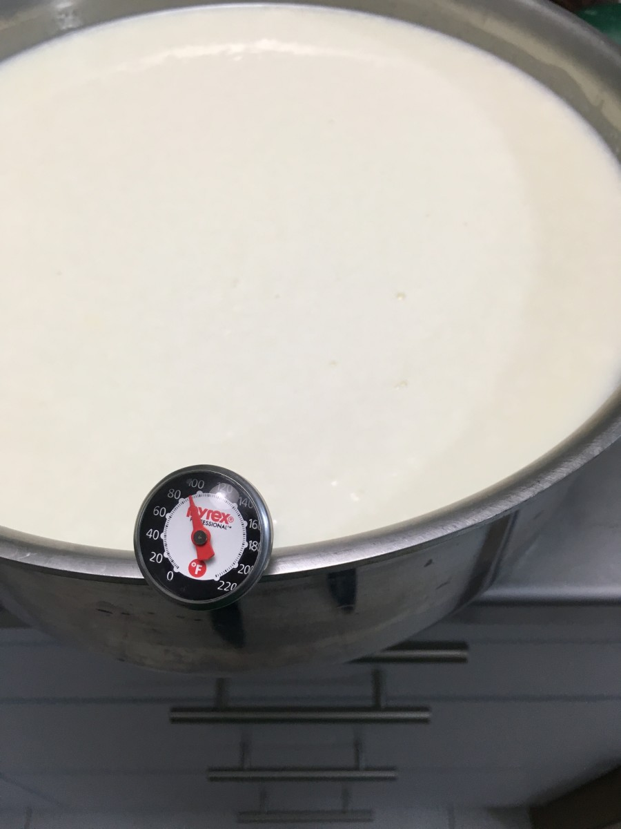 After mixing in the diluted citric acid, heat pasteurized milk to 90 degrees Fahrenheit. If using raw milk, heat to only 88 degrees Fahrenheit.