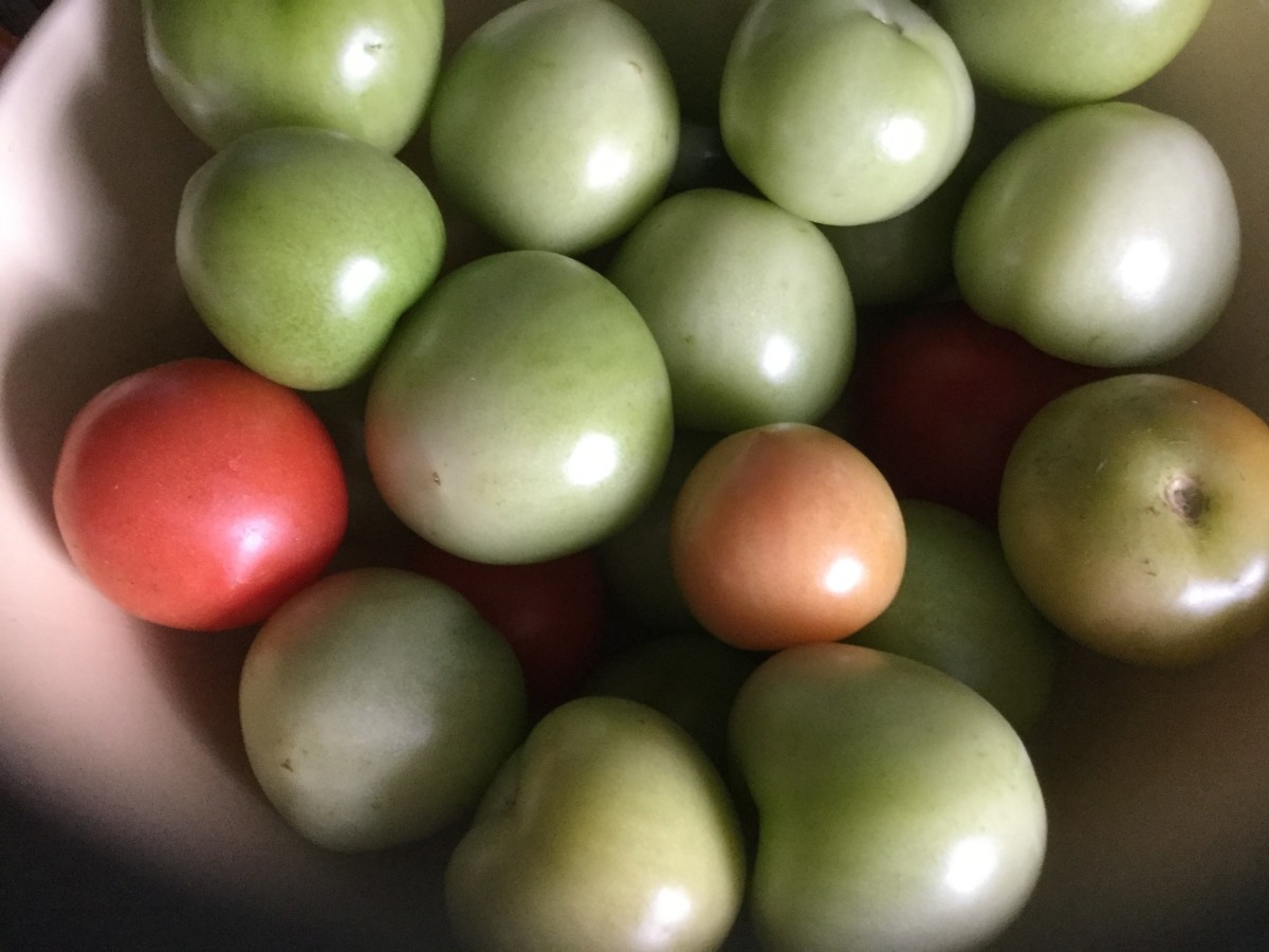 Mainly, I used green tomatoes, but I used a few red ones, as well.
