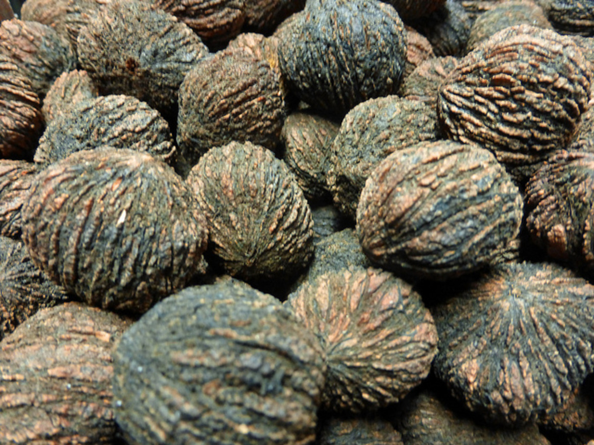 Hulled black walnuts.