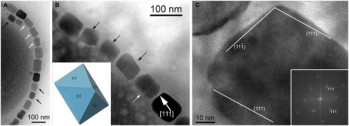 Magnetite magnetosomes in a bacterium