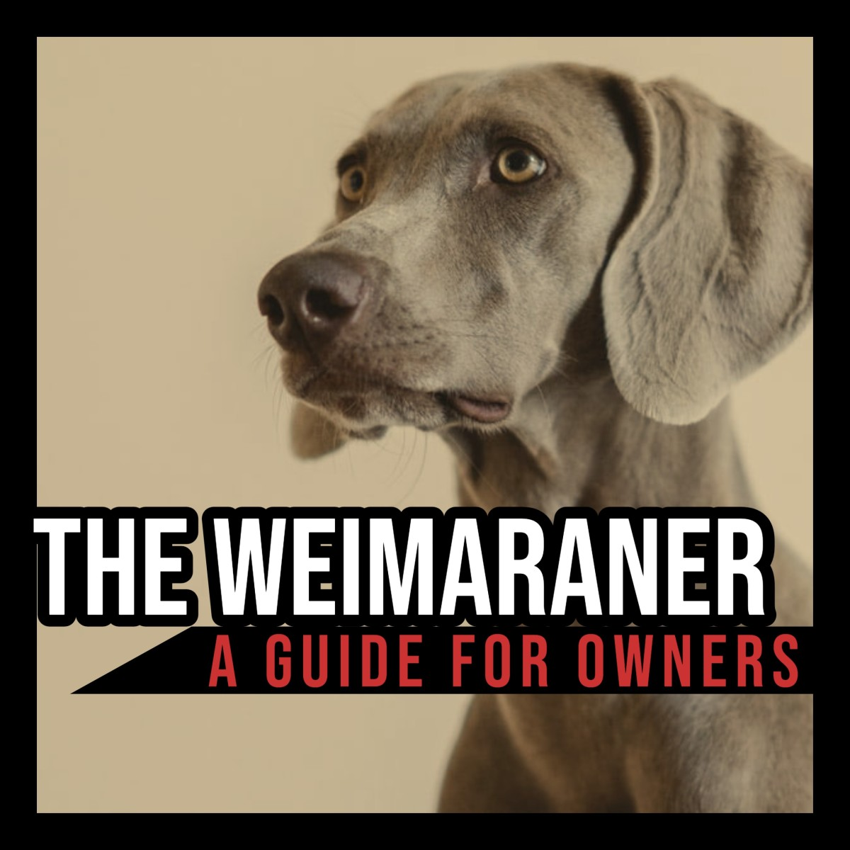 The Weimaraner: A Guide for Owners