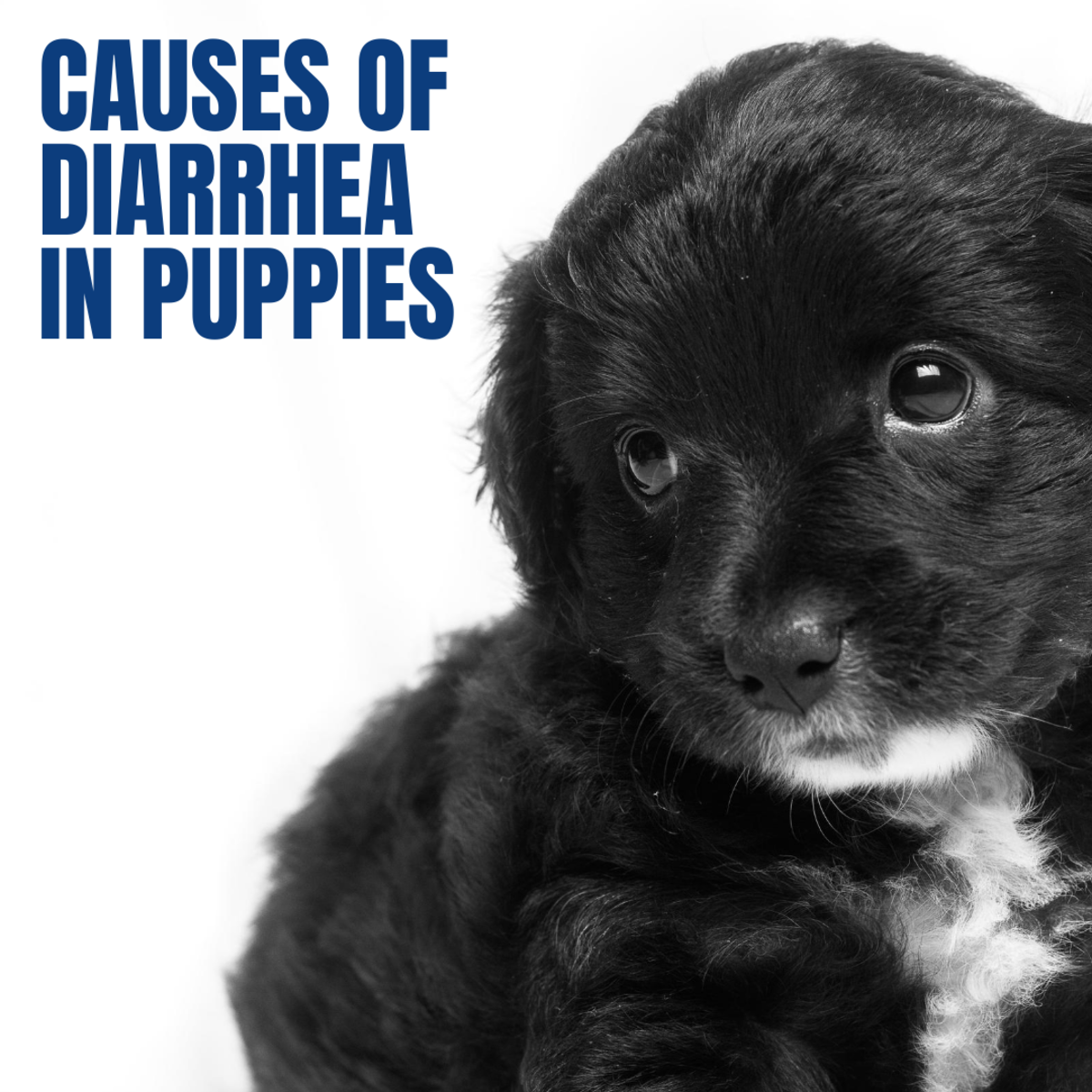 What Causes Diarrhea in Puppies?