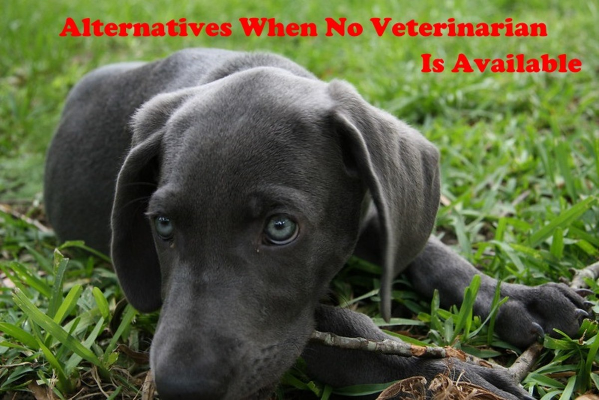 If no emergency vet is available to help your sick dog there are options available.