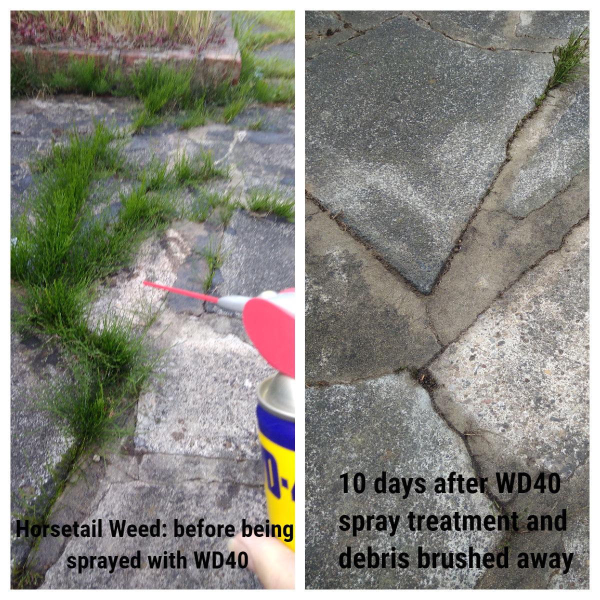 Part of my Patio before spraying with WD40, and then ten days later after brushing away the debris. An impressive start, although a small piece of the horsetail weed remains (top right). The real test will be if this invasive weed re-appears.