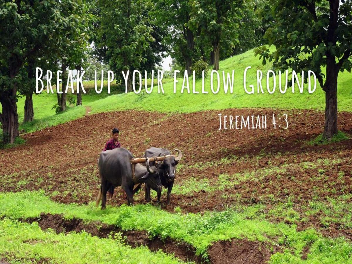 Breaking Up the Fallow Ground of Your Heart