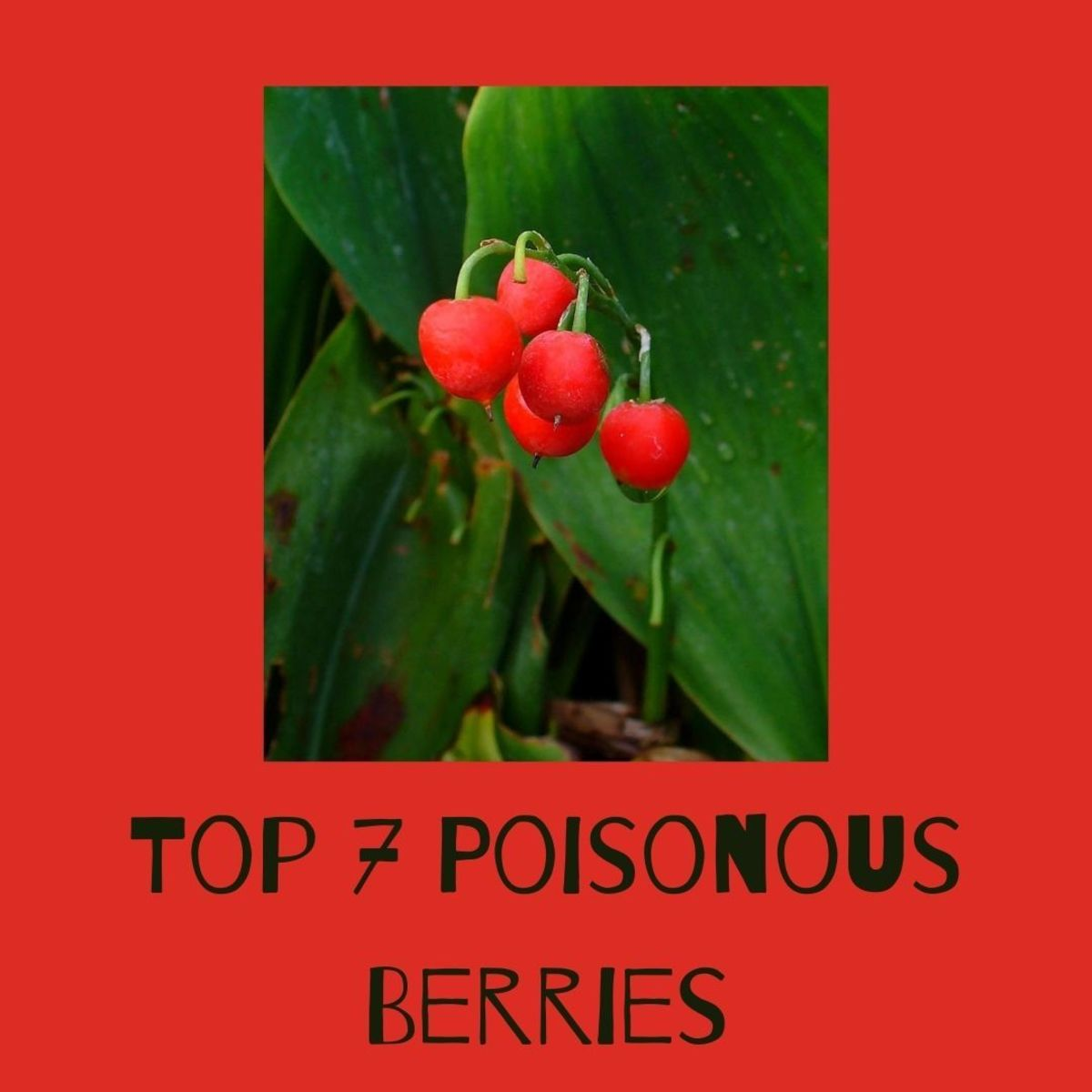 7 Most Poisonous Berries (With Photos and Descriptions)