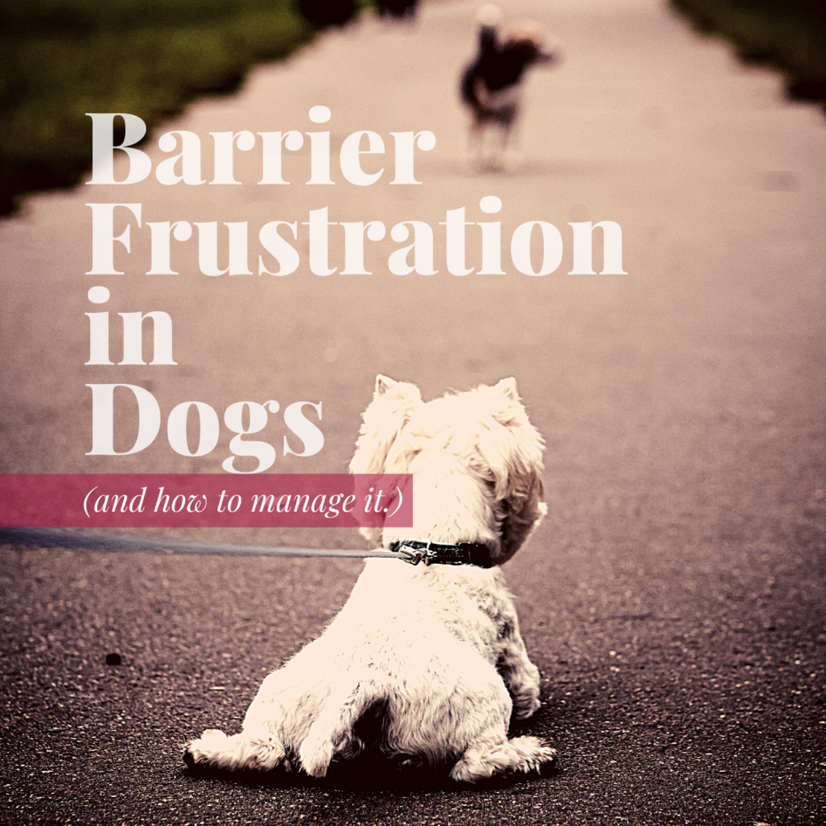 What is Barrier Frustration?