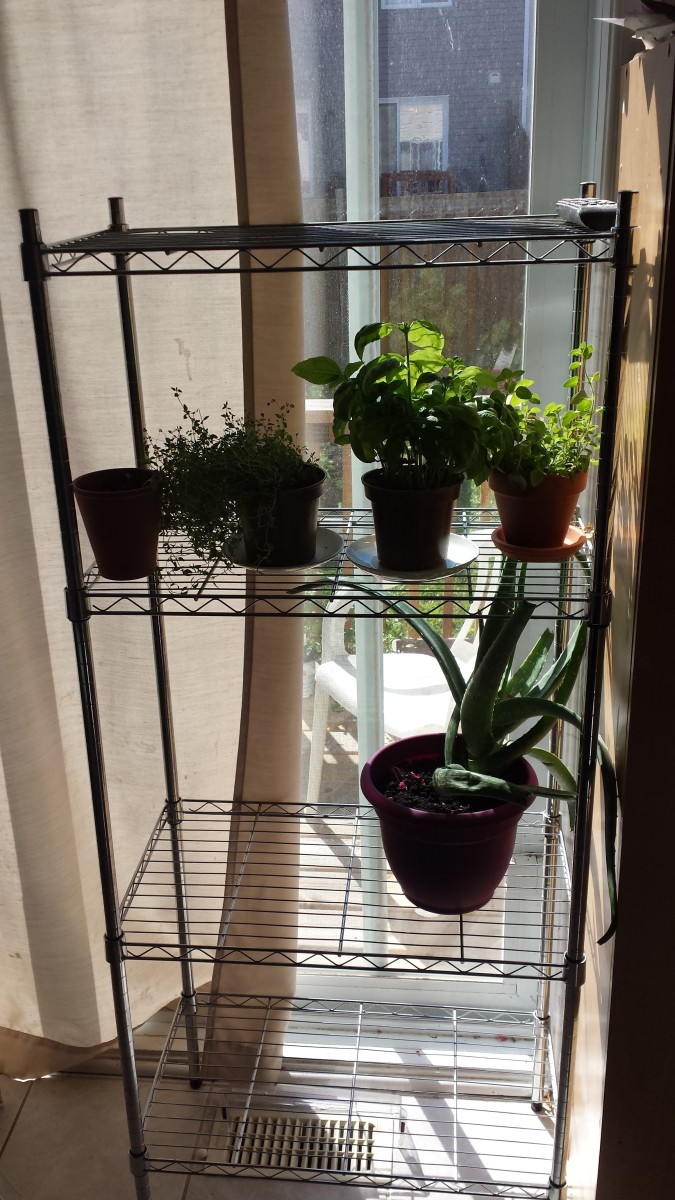 Making use of my sunny windows (growing herbs).