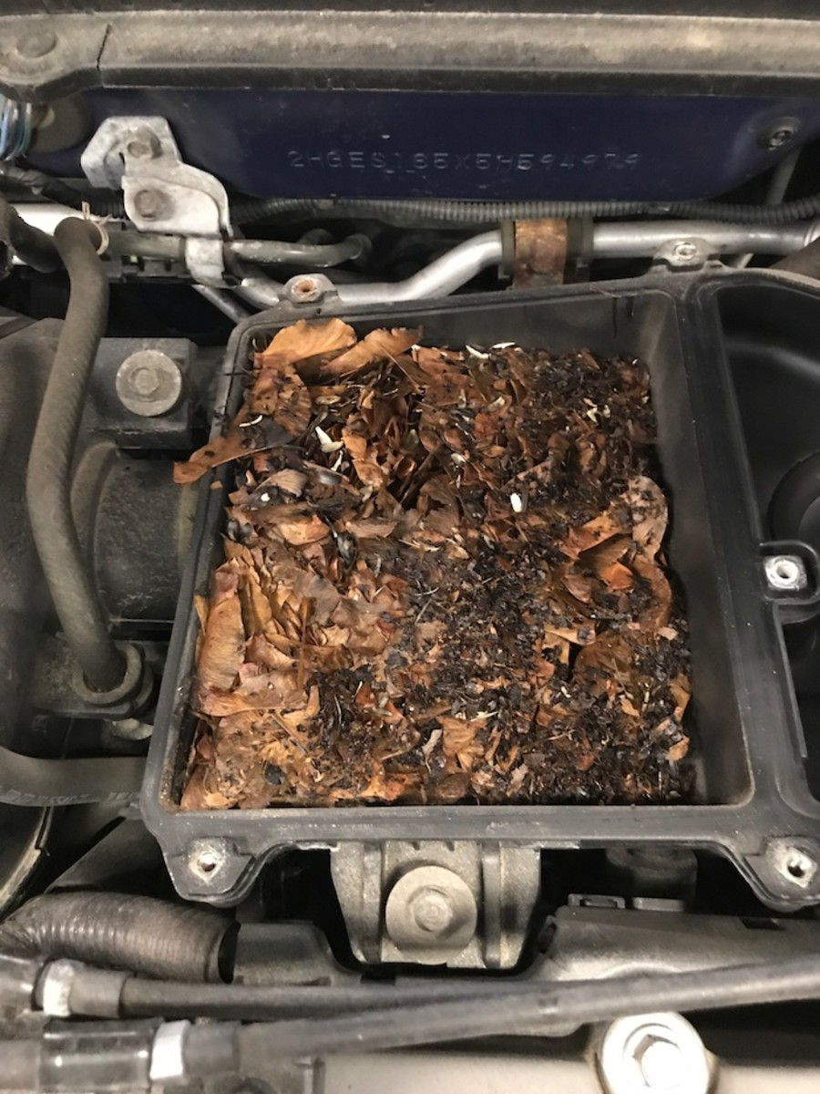 Mouse nest built inside of an engine air cleaner filter housing, also comes with free nuts!