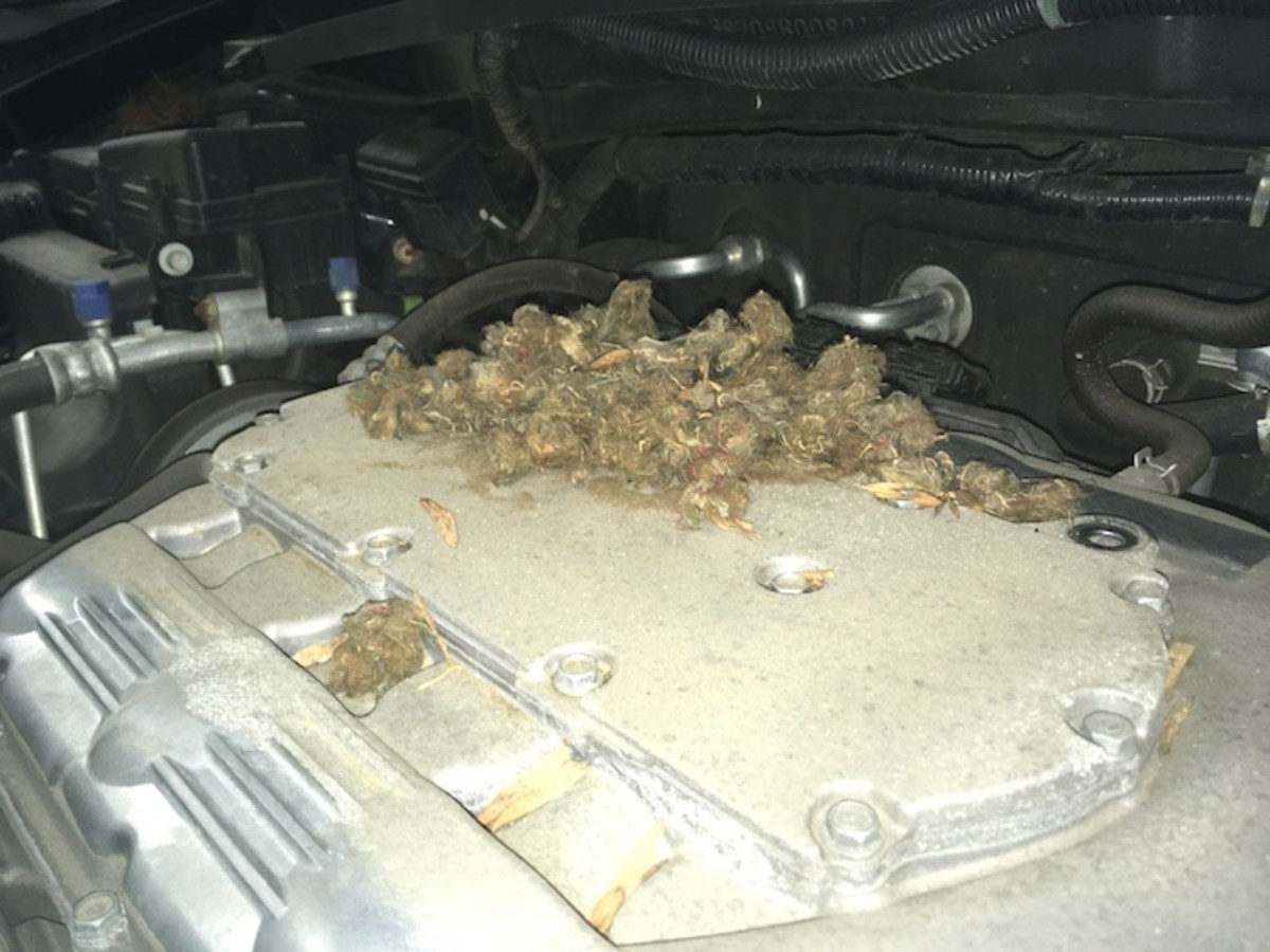 Mouse nest built on top of a car engine