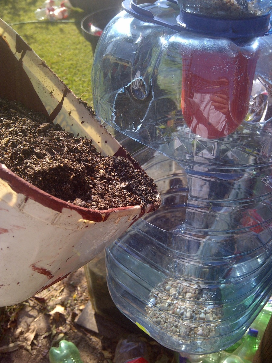Filling up your containers with potting soil. Can you see the gravel at the bottom? It will help with drainage.
