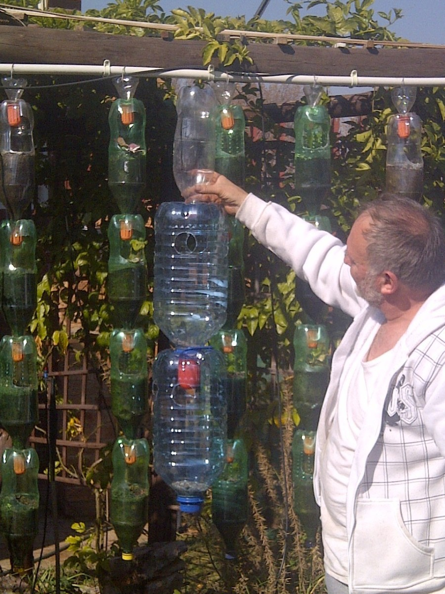 Louis Fourie in the garden June 2013 holding up the strawberry farm. The bottles in the background are from the previous hanging garden.
