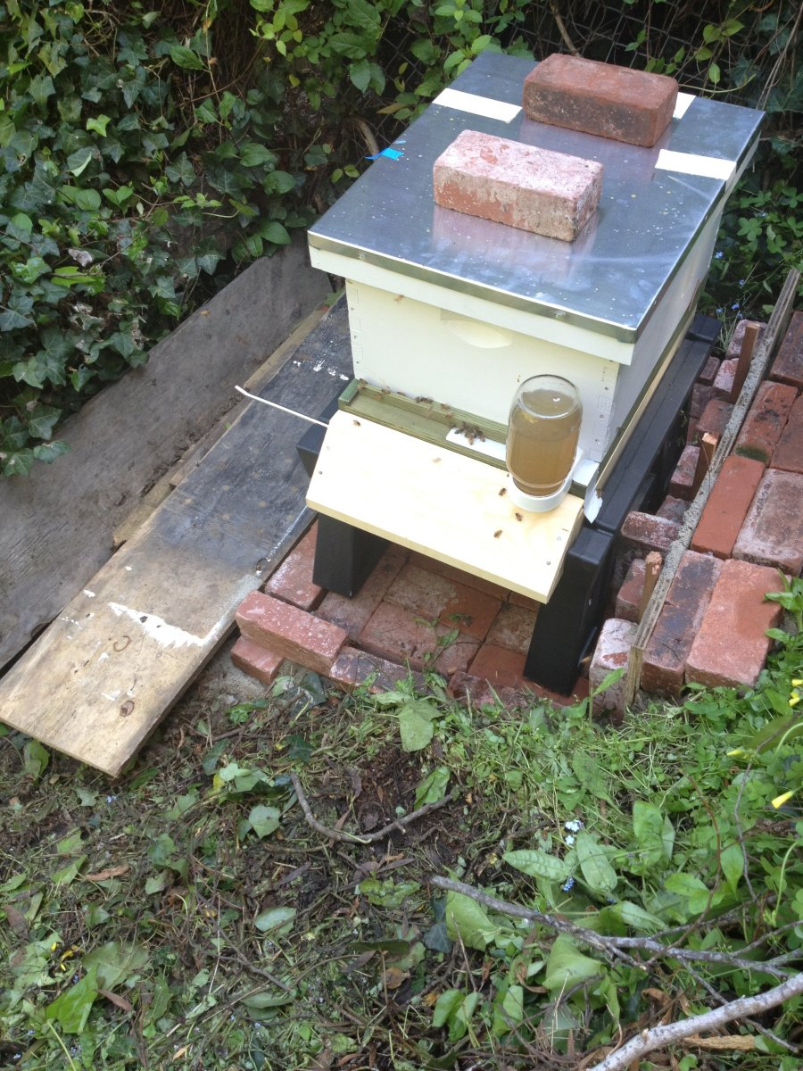 Our spot for my hive.  We live on a creek, so we had to secure a safe spot that kept the bees away from the kids, but also had sun.