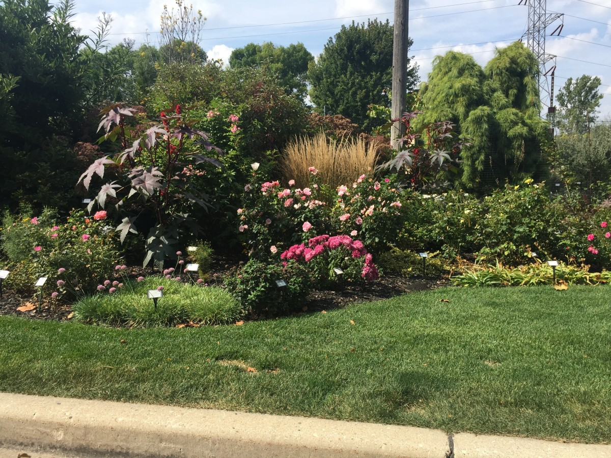 The Rose Innovations, William Radler Rosarium in Greenfield, WI. This is the residence of William Radler, Creator of Knock Out Roses.