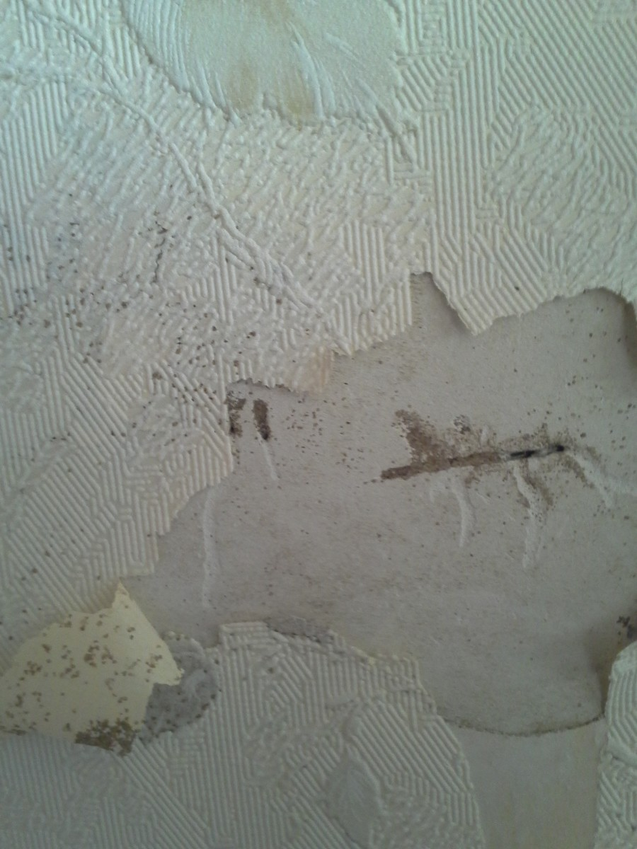Drywall can hide termite tubes. This was the only obvious sign of tubes on the inside main floor of a two story house with basement. A closer look revealed extensive wood damage to floor joists & the sill plate that supports the weight of the house.