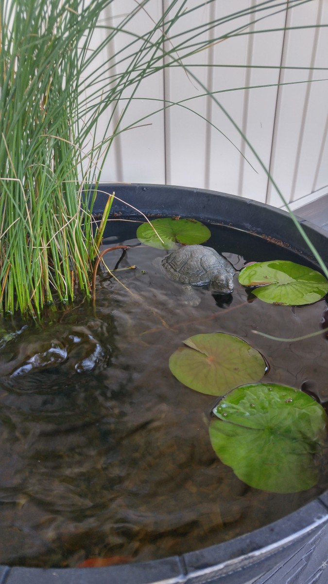 Another view of a completed container water garden.