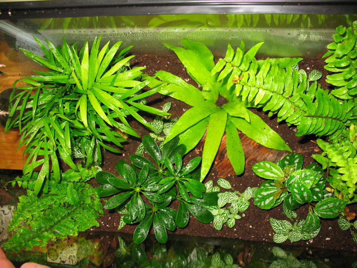 How To Make A Plant Terrarium Dengarden