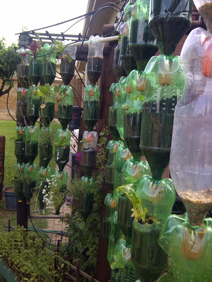 Gardening In Bottle : Recycling plastic bottles: Build your own hanging garden.