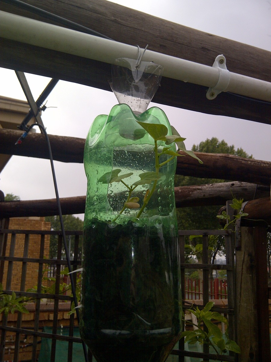Recycling Plastic Bottles Build Your Own Hanging Garden | Party ...