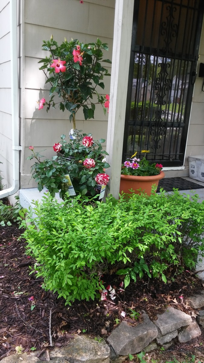Flowering plants on porch
