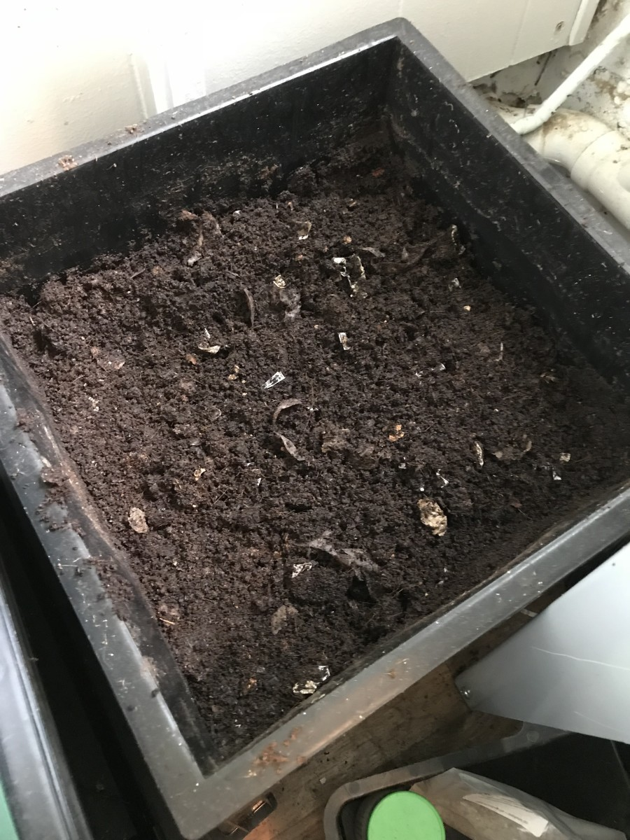 This vermicompost is ready to use on plants. There is still some visible cardboard left.