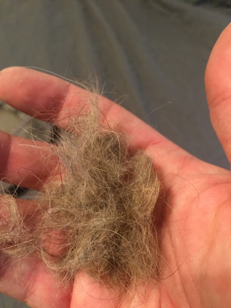 The power robbing hair that was wound around the hubs of my Roomba's brushes (hair from one brush hub shown)