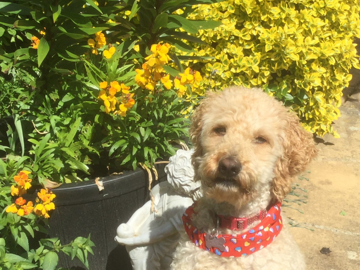 5 Easy-to-Grow Yellow Annual Flowers for Hope and Friendship