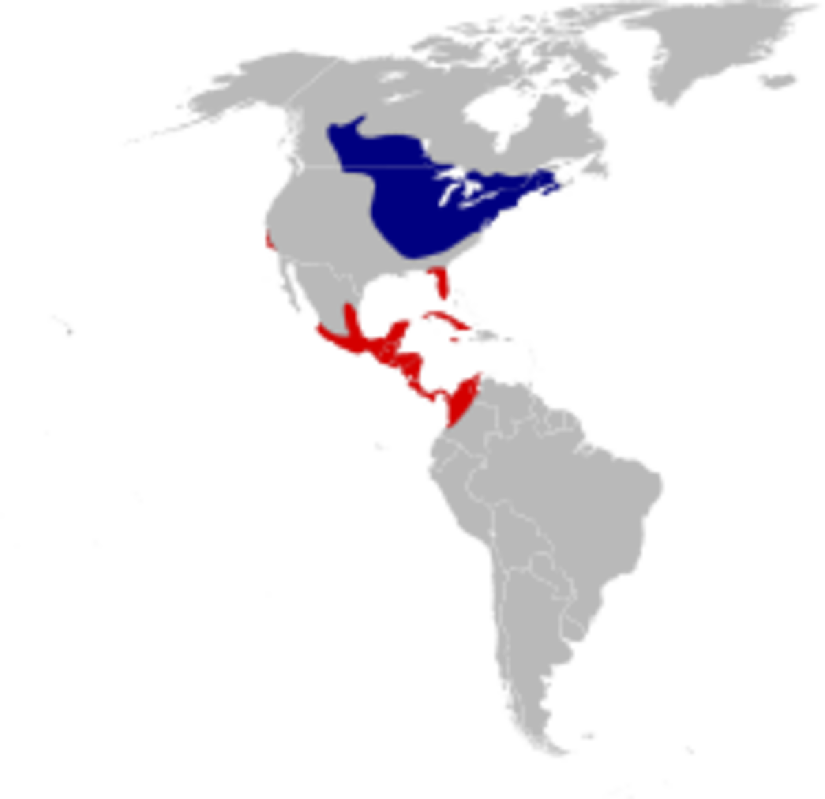 Map illustrates how far Northern Orioles migrate from Canada to South America and back again.  Blue indicates their breeding range, while the red shows their winter destinations.
