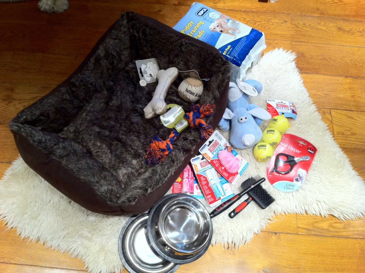 Our Puppy Starter Kit