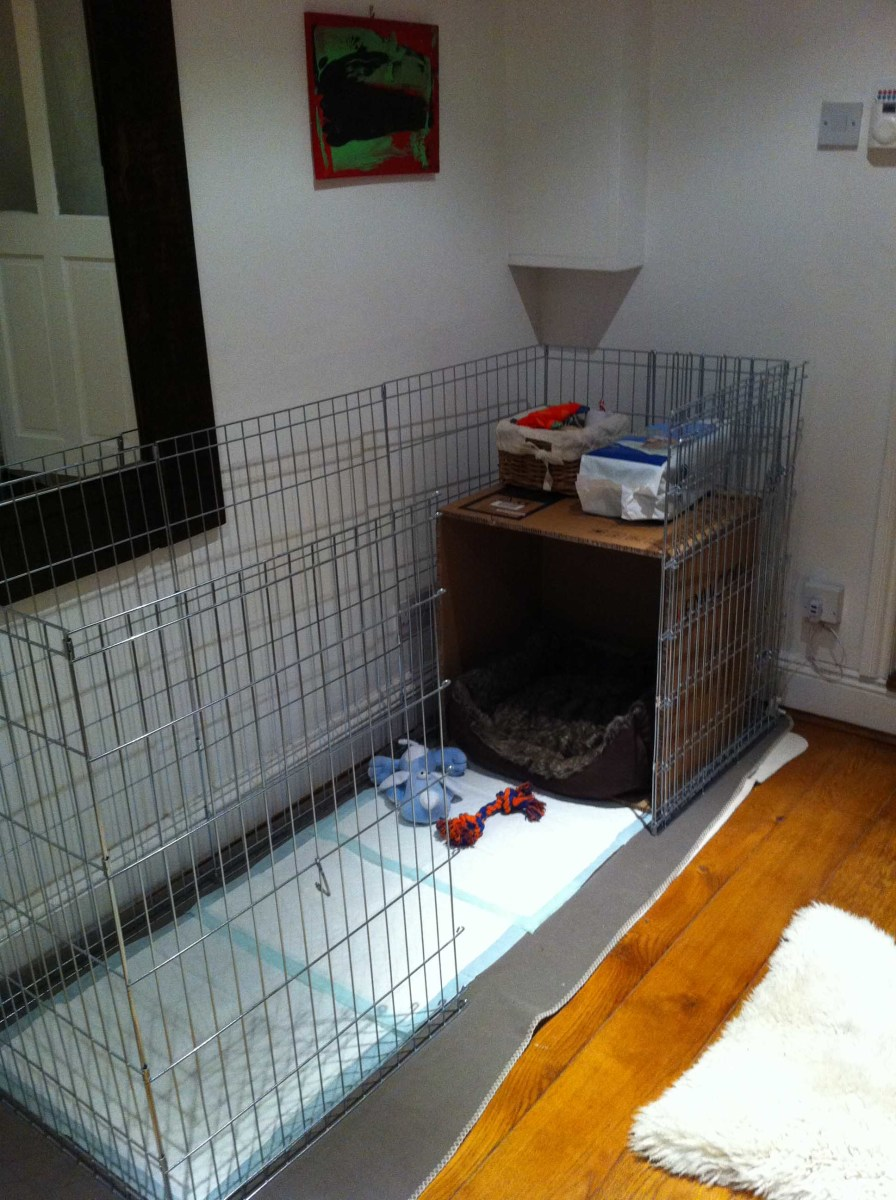 Our initial puppy playpen set  up, with a cardboard box around the bed to create a little 'den', and the floor covered with puppy pads. We later replaced this setup with a crate.