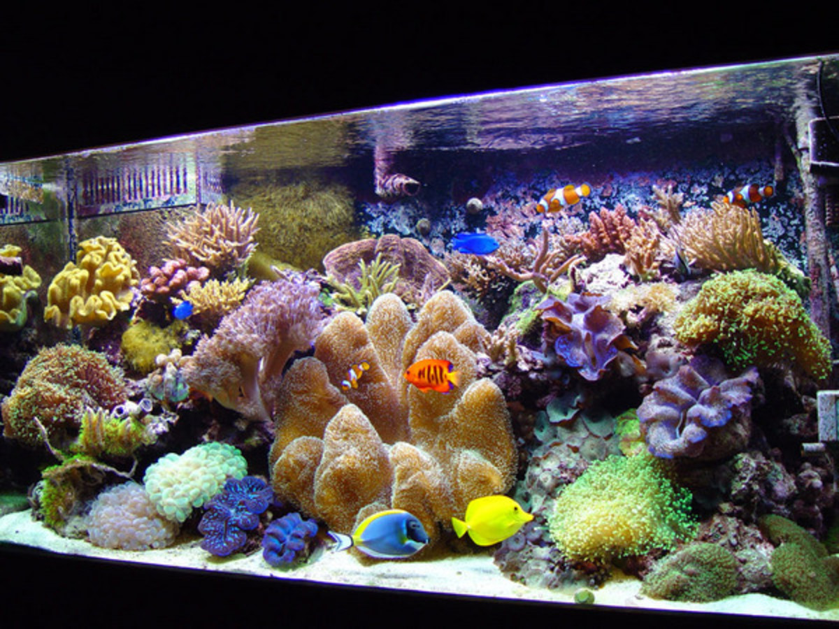Saltwater tanks can be a fantastic hobby for anyone who has a lot of money to spend and a mind that needs constant challenges.