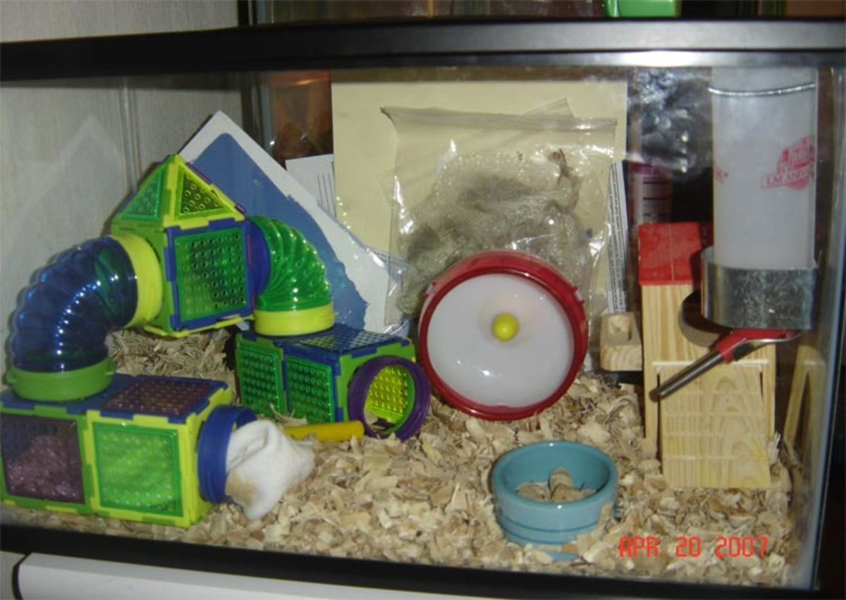 Example of a 10-gallon aquarium as a hamster home. Aspen bedding.