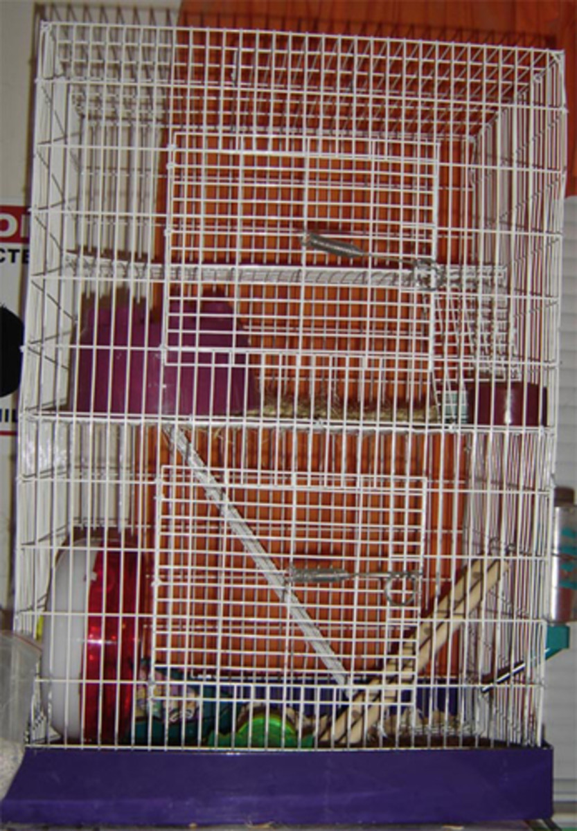 Wire hamster cage.