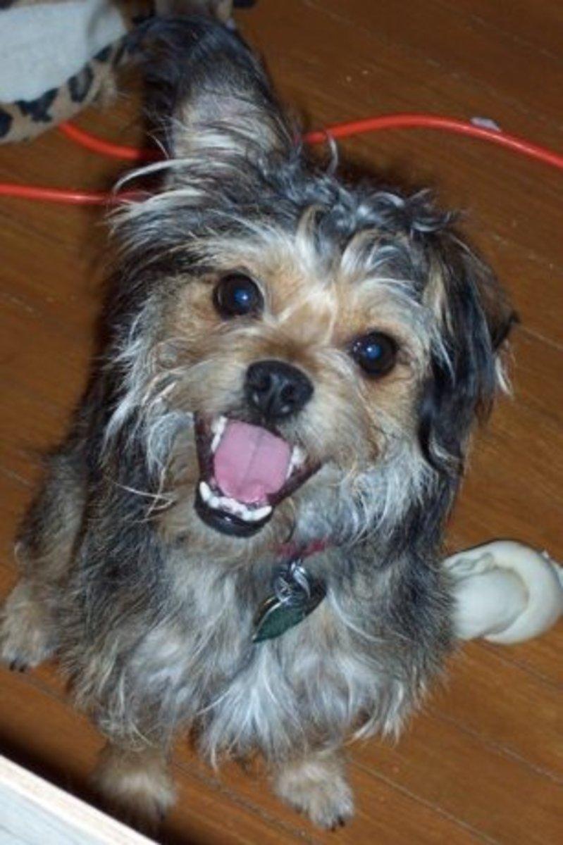 adopting-a-dog