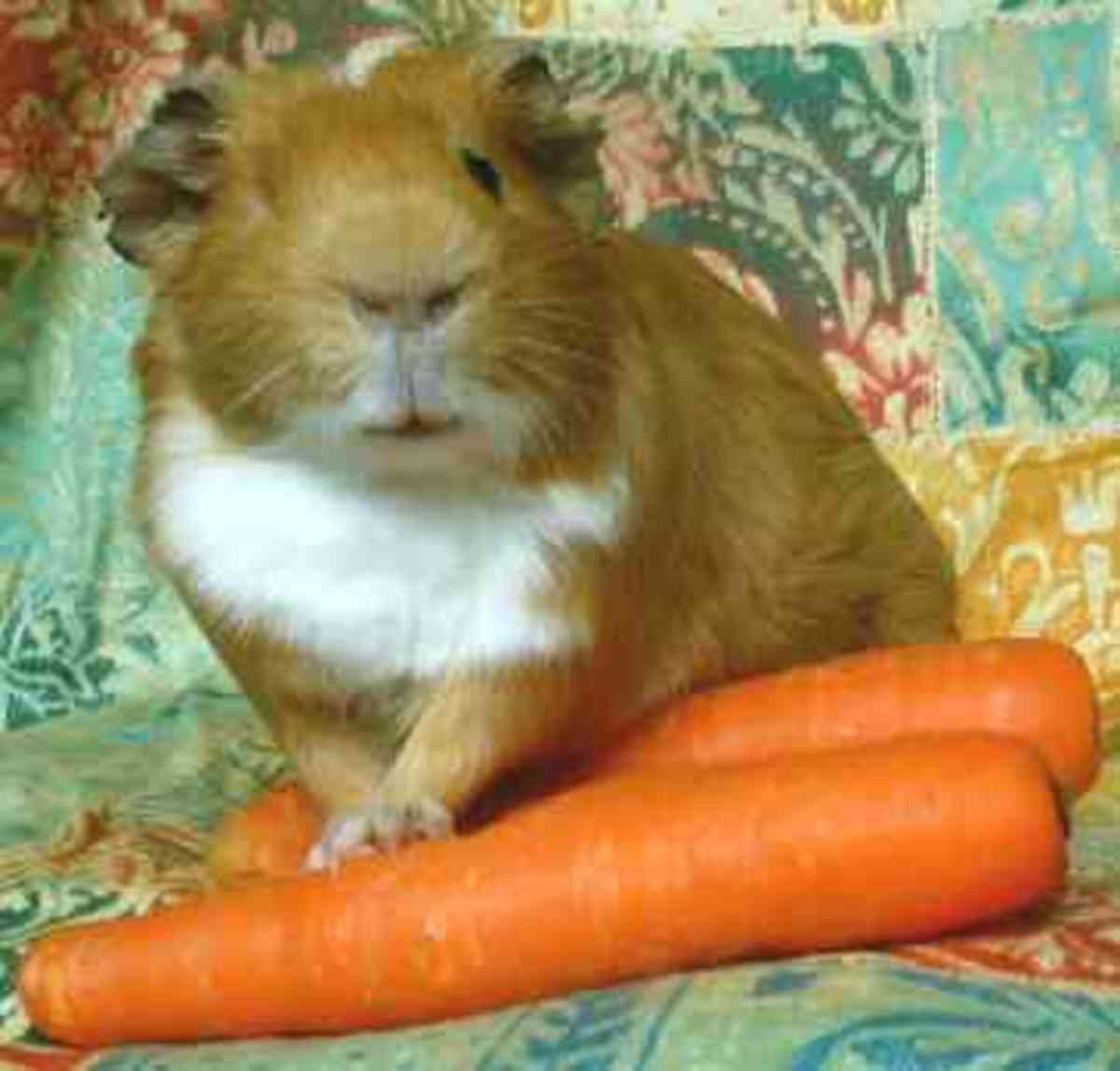 Goes in as carrots, comes out as beans