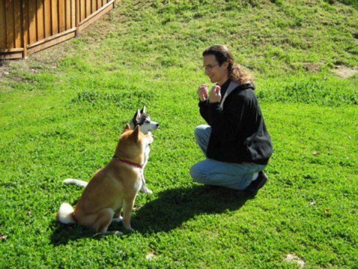 Reward-based dog discipline is safer because there is little danger for your dog to become fearful, aggressive, or stressed.