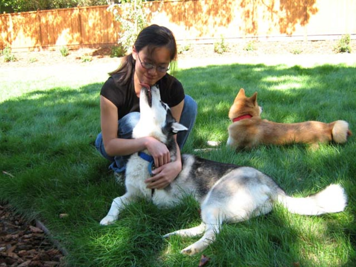 Reward-based dog discipline results in a dog licking your face rather than biting it.