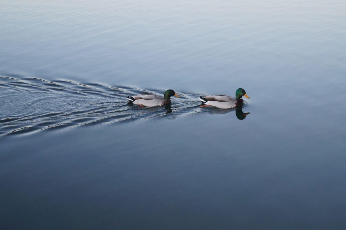 Ronnie and Reggie Take to the Lake