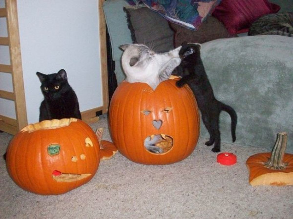 Kittehs Playing with Pumpkin