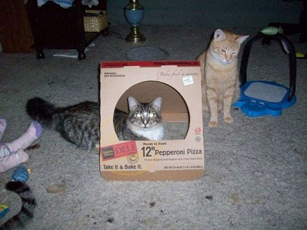 Our cats love playing with pizza boxes.
