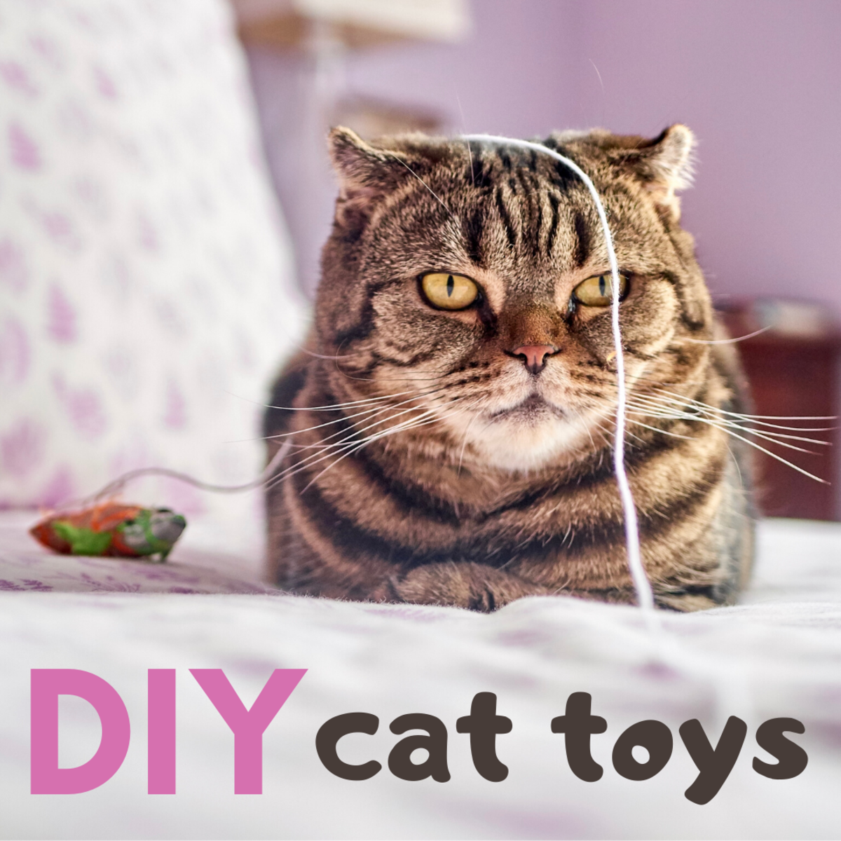 Want more great DIY cat-toy tutorials? Look no further!