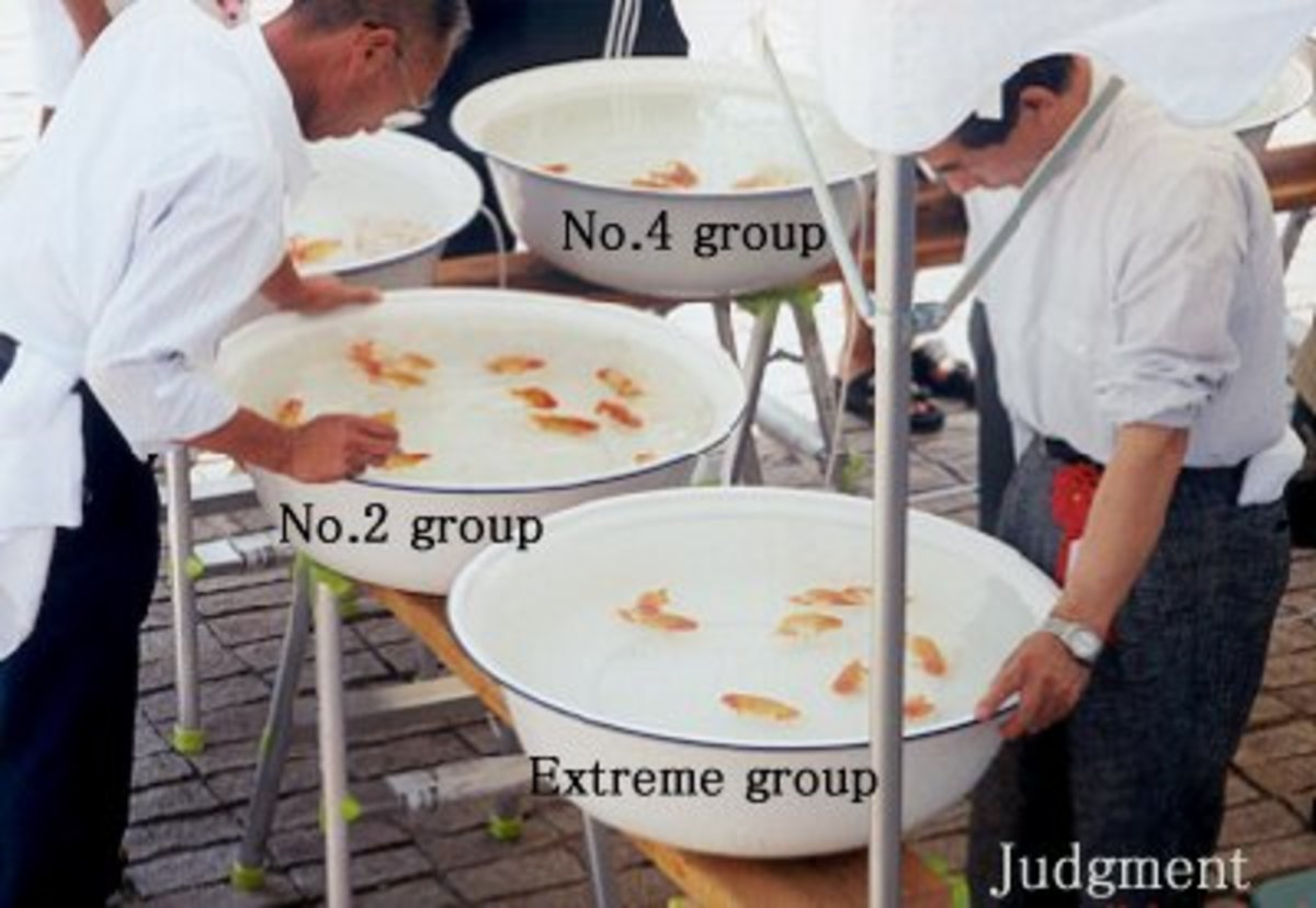 serious fish judging:)