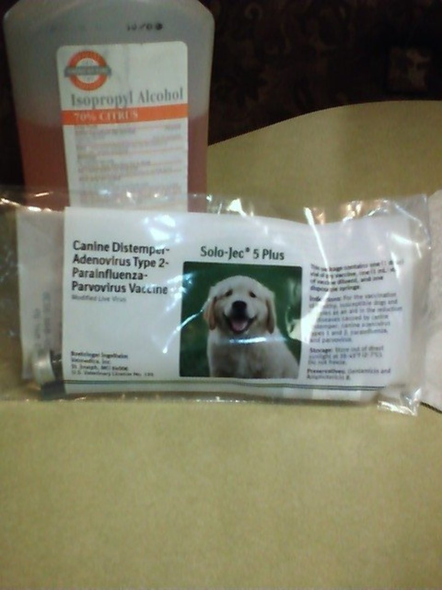 how to give your puppy a shot