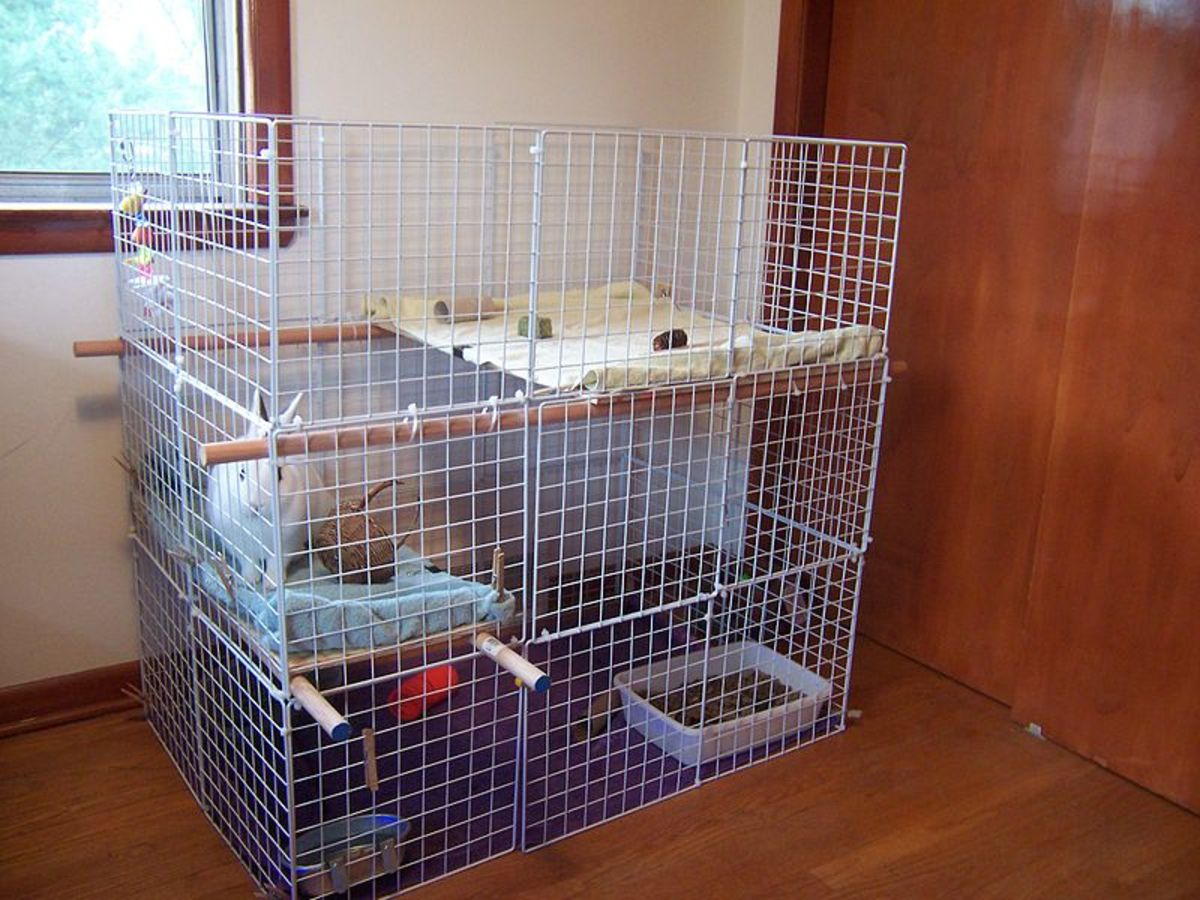 "Even if you plan to let your rabbit roam free in your home, it still needs a ""safe"" place that's only its own. This is where you'll feed the rabbit and put it at night or while you're away from home."