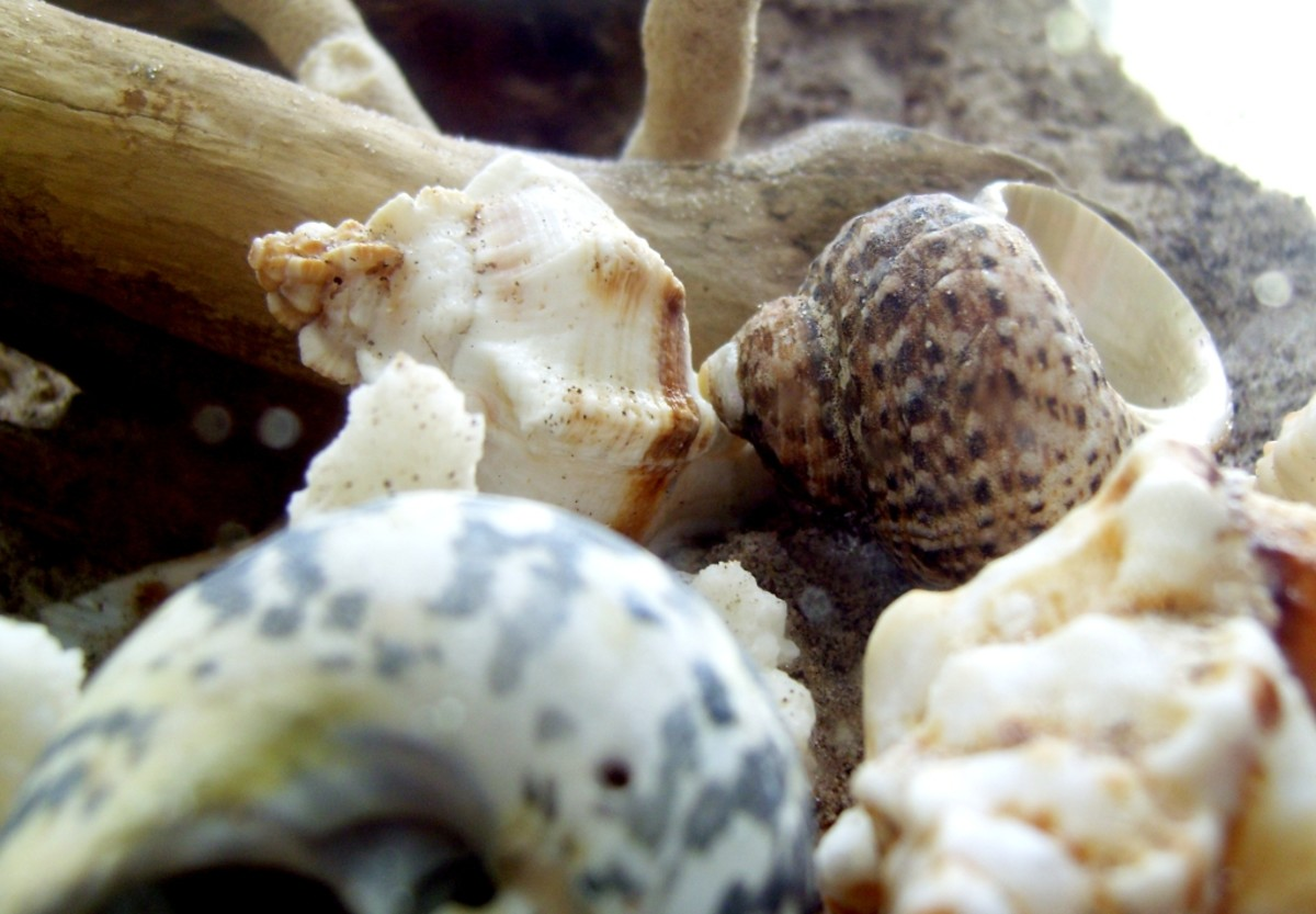 It is important to provide extra shells that are the proper size for your hermit crabs.
