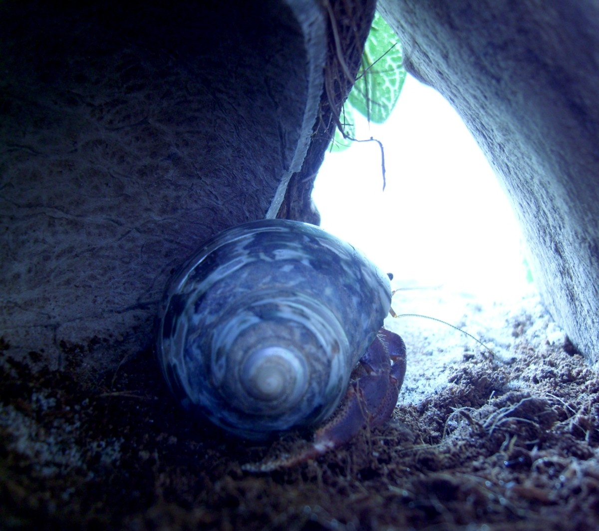 Hermit crabs like to hide and are most active at night, so they aren't always the most interesting pets to show to friends.